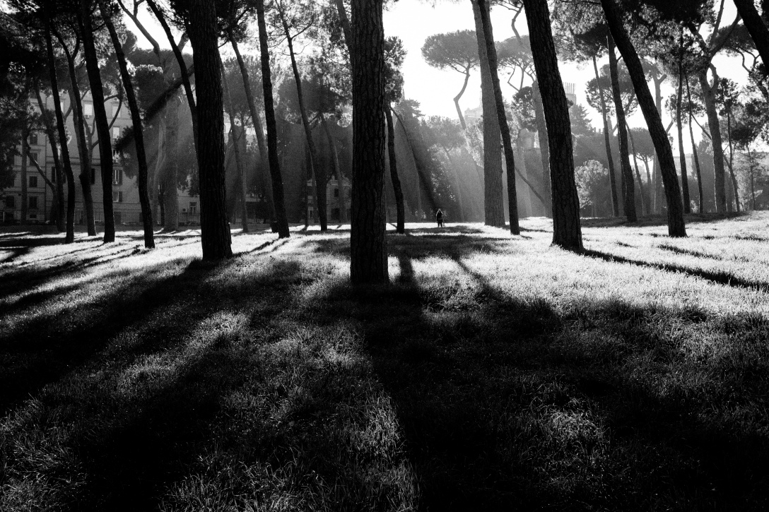 This photographs shows rays of light filtering though some threes in Villa Borghese, Rome