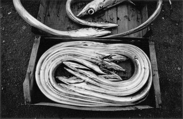 Ferdinando Scianna's black and white image of free fish in Sicily