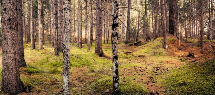 A panoramic photograph of the woods surrounding Cortina d'Ampezzo, Dolomites, Italy
