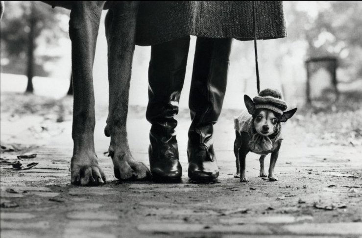 Elliott Erwitt's black and white photograph of two dogs